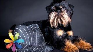 Топ-3 самых дорогих и требующих ухода пород собак - Все буде добре - Выпуск 604 - 21.05.15