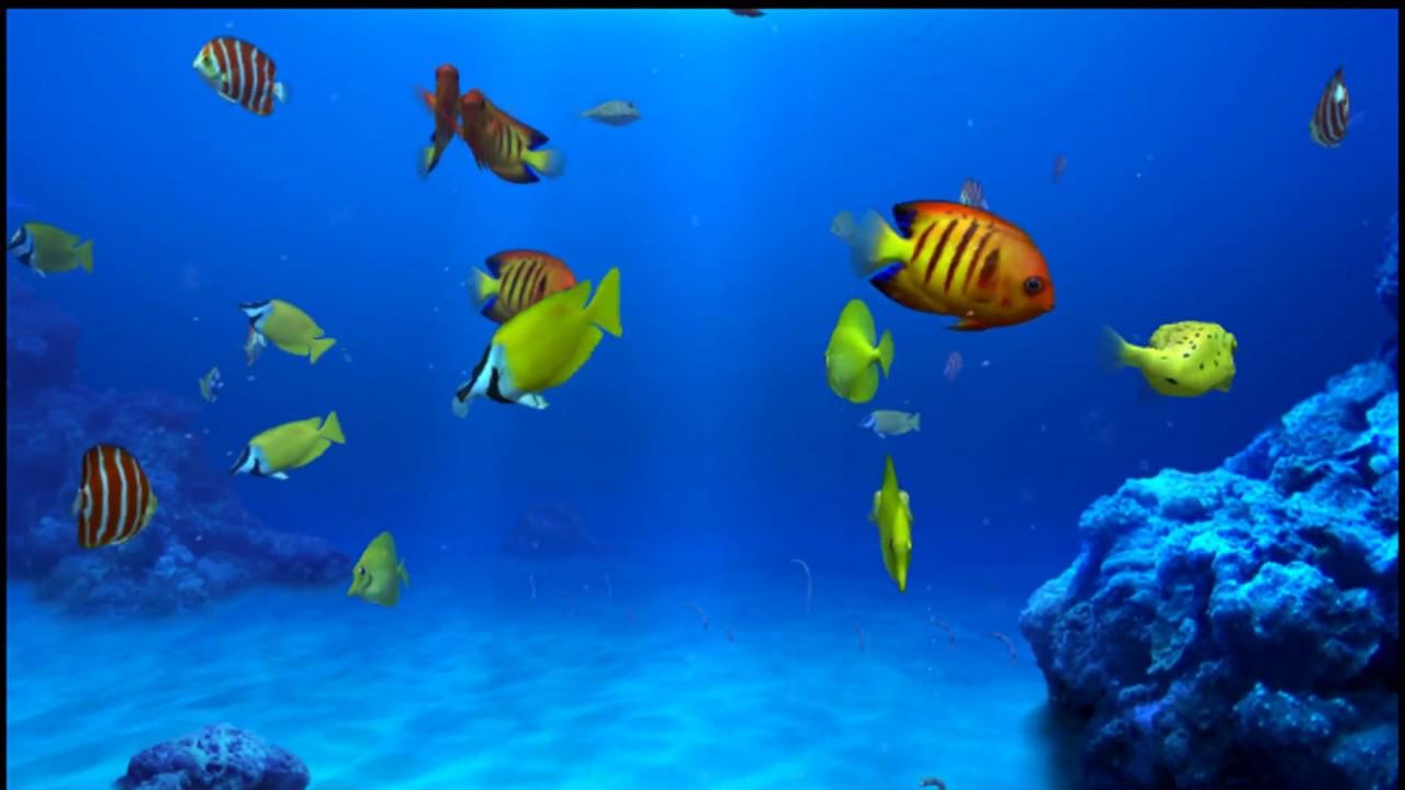 digifish aqua real 2 1080p screensaver