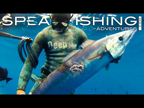 SPEARFISHING IN THE SOUTH ATLANTIC HD - ASCENSION ISLAND