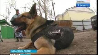 """Полицейский пёс Чак в Боханском районе получил медаль за отличную службу, """"Вести-Иркутск"""""""