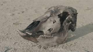 Son Of The Soil | Short Documentary
