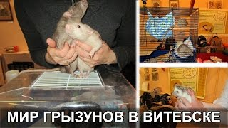 Выставка Мир грызунов в Витебске 2016. Выставка животных в Витебске(В выставке животных