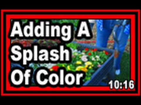 Adding A Splash Of Color - Wisconsin Garden Video Blog 599
