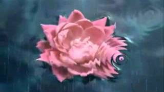 Wild Flower (Skylark)