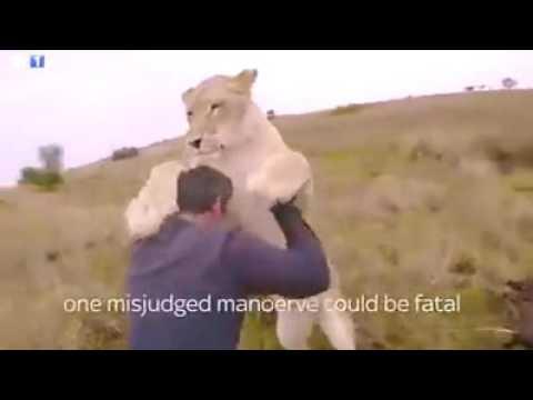 Sungguh Mengharukan,,, pertemanan harimau dan manusia
