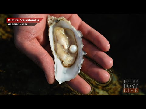 Woman Finds 51 Pearls Inside Oyster Dish