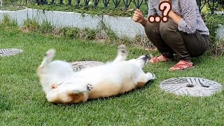 반가워서 난리치던 강아지의 반전ㅋㅋㅋ