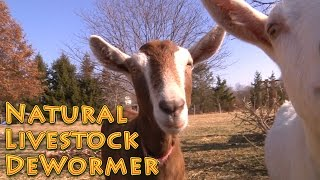 Natural Livestock Dewormer - no harsh chemicals - Deworm Goats Chickens Livestock Dogs etc.