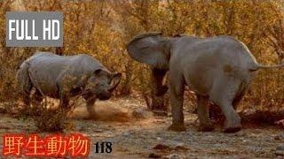 【動物 戦い 】野生動物-野生動物 戦い-ゾウ対サイ 2016!! Playlist : ...