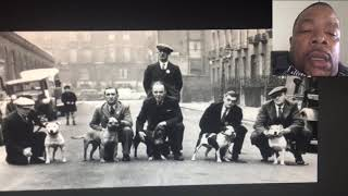 First breed from England was Staffordshire Bull Terriers that came over to USA