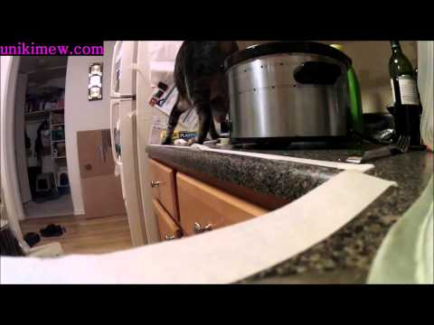 How to Stop an Awnry Cat Jumping on Counter