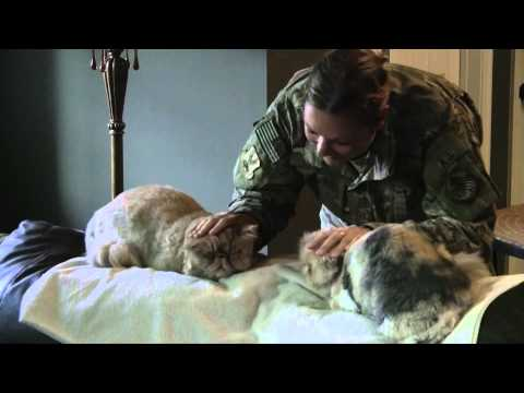 Cats Welcoming Soldier Home!