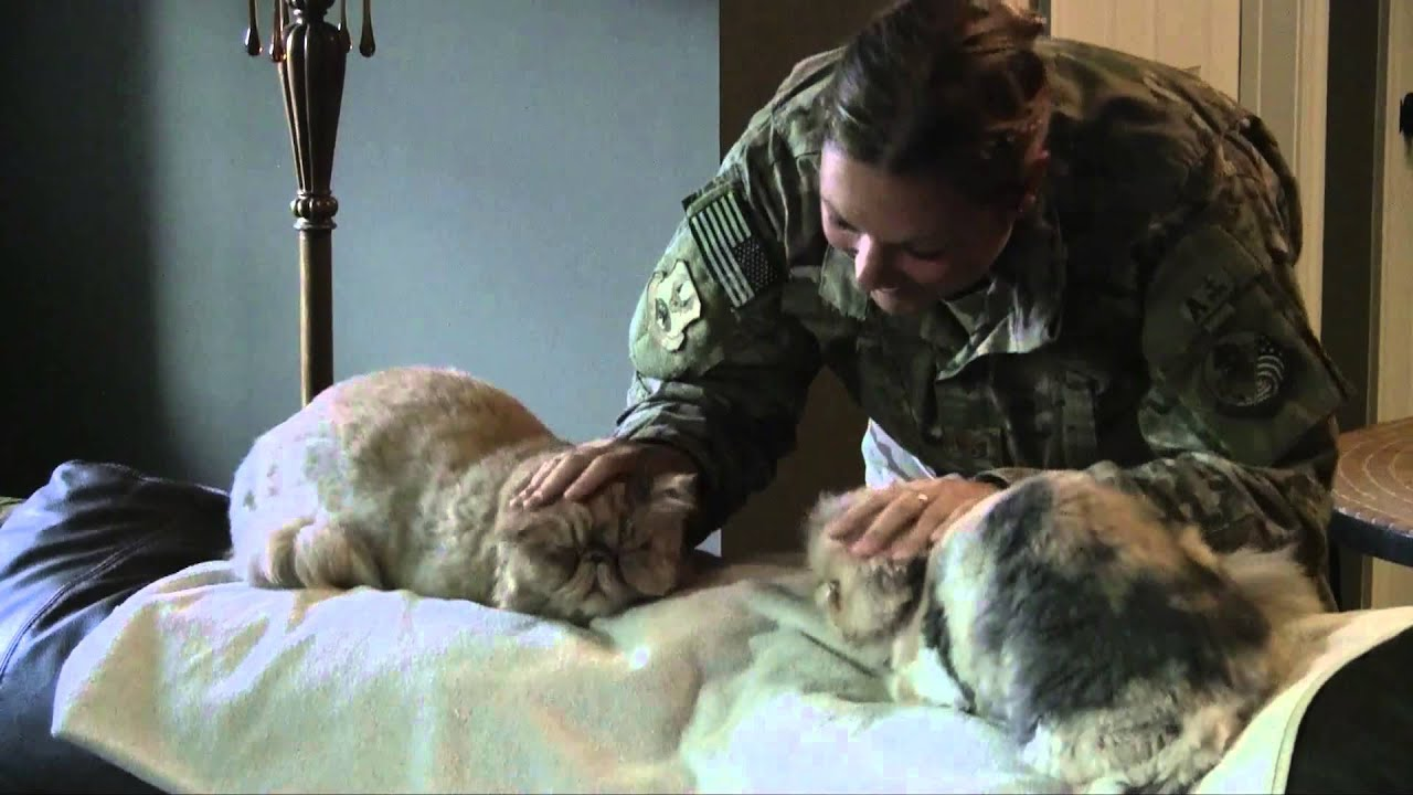 Cats Welcoming Soldier Home Youtube