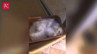 Как реагируют коты если лоток помыть хлоркой))