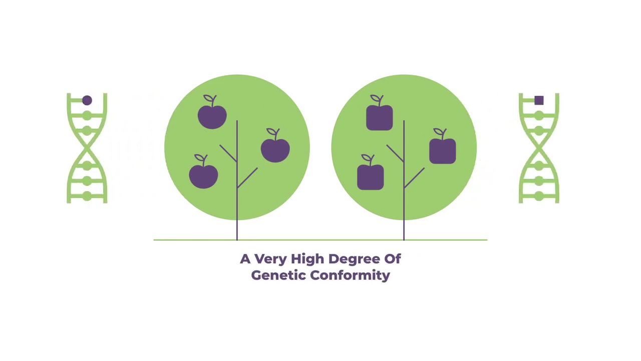 CIOPORA Explains: Understanding the Concept of Essentially Derived Variety