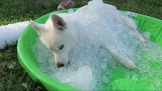 top life hacks 7 simple life hacks for your dog