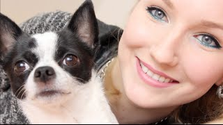 HAUSTIER TAG - Mein Chihuahua Mylo (mit Welpen Video)