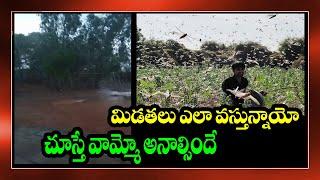Cover images locust attacks Video Goes Viral ||locust attack india 2020|| Toptelugumedia