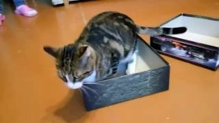 Жилье для кота. Муки выбора.