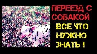 Переезд из России с собакой 1ВездеВместе