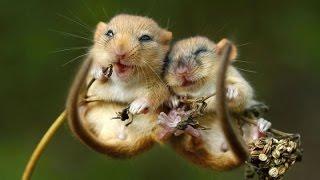 Любовь животных такая милая...