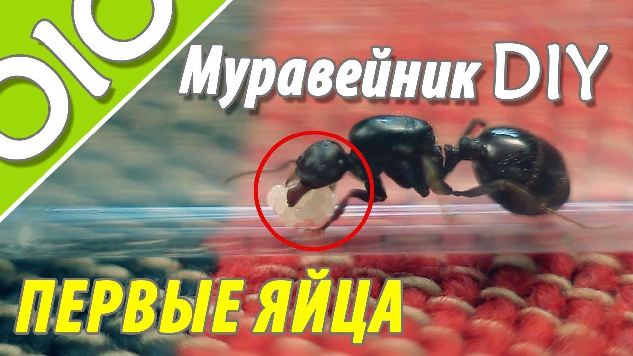 Из чего сделать муравейник своими руками фото 252
