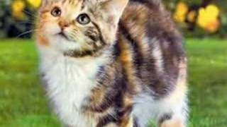 Коты-Воители!Созвездие Судеб!