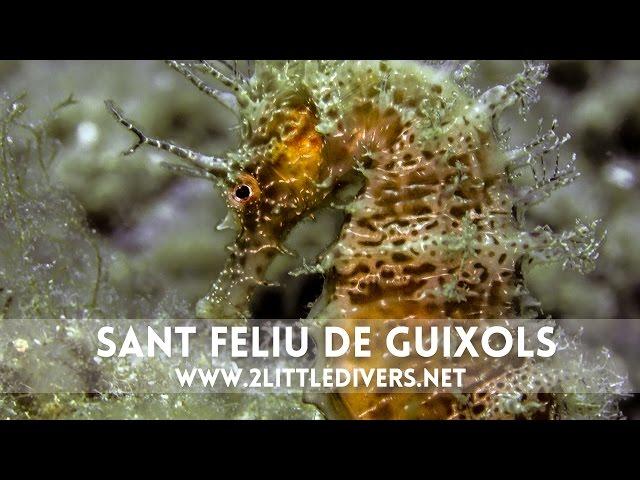 2 Little Divers | Inmersión en Sant Feliu Els Illots Secains