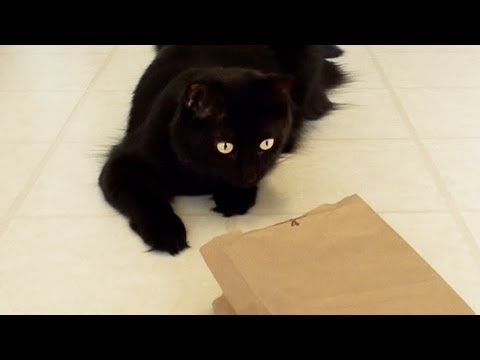 Cats in Bags! - Compilation