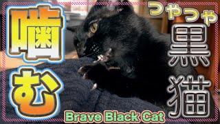 勇敢に立ち向かう黒猫