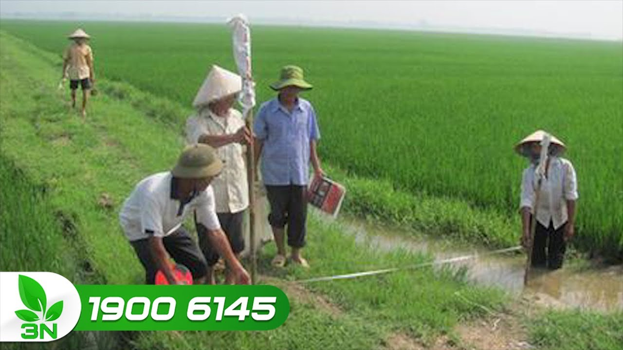 Hà Nam: Nhiều nông dân cho thuê đất nông nghiệp |  VTC16