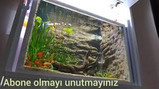akvaryum da tropik balık seyir keyfi
