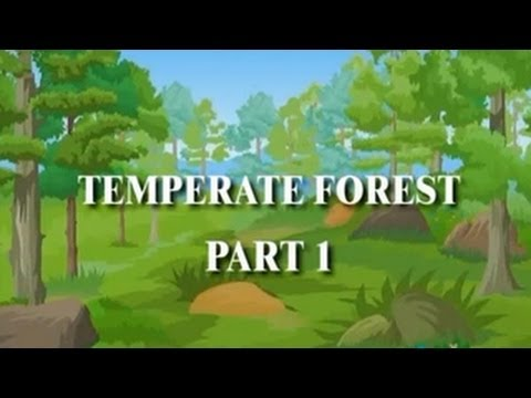 World Biomes | Temperate Forest | Part 01