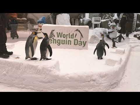 Ski dubai penguin show