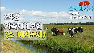 손해평가사 X파일 - 24강 가축재해보험 (소 예시문제) 2019년 개정 업무방법서 기준