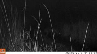 Video Hyena at the Issa Valley (credit UPP) download MP3, 3GP, MP4, WEBM, AVI, FLV November 2017