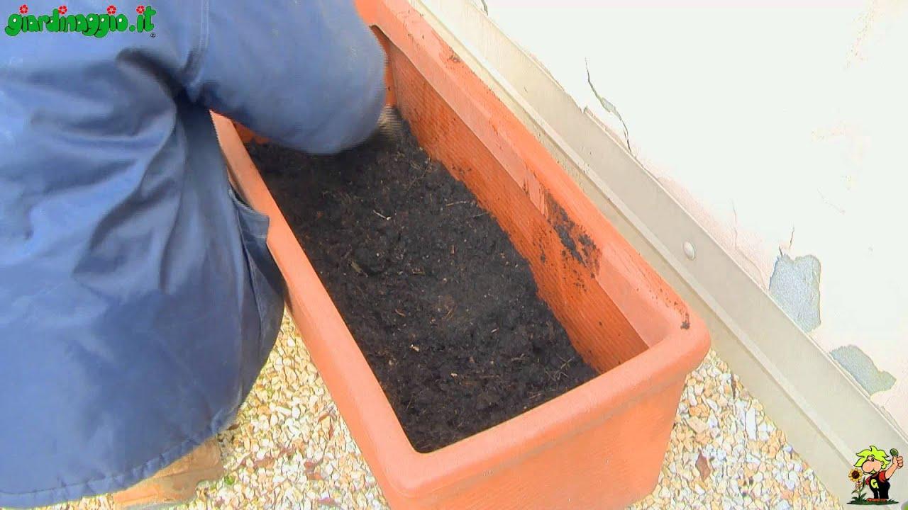 Giardino in terrazzo progettazione posizione e scelta for Terrazzo giardino progettazione