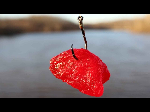 Fishing For Catfish With Jello - 6 Catfish Bait Recipes - How To Catch Catfish