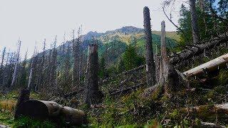 Dlaczego las potrzebuje martwych drzew?