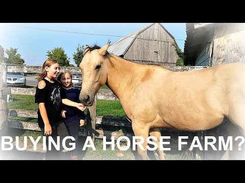 SHOULD WE BUY THIS HORSE FARM? Day 258 09/16/17