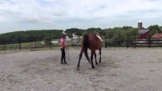 How to calm down a Hot Horse