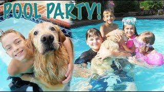 Golden Retriever Pool Party!!   Crazy8Family Video