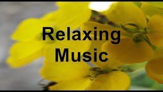 Relaxing Music Easy Listing Better Sleep Study Delta Waves Inner Peace Yoga Meditation Love piano