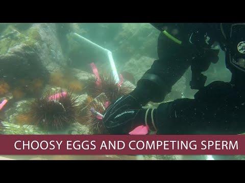 When Sperm Compete, Eggs Have A Choice