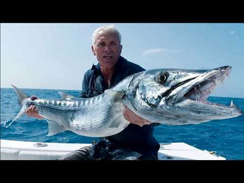 TOP 10 MOST FASTEST FISH IN THE WORLD