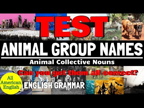 TEST Of ANIMAL GROUP NAMES | Commonly Used ANIMAL COLLECTIVE NOUNS | All American English