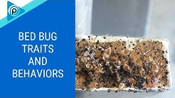 Bed Bug Traits and Behaviors (episode 97)