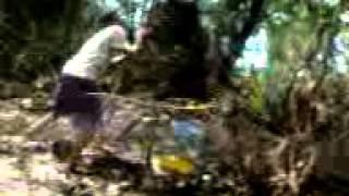 cara memikat burung cicak ranting