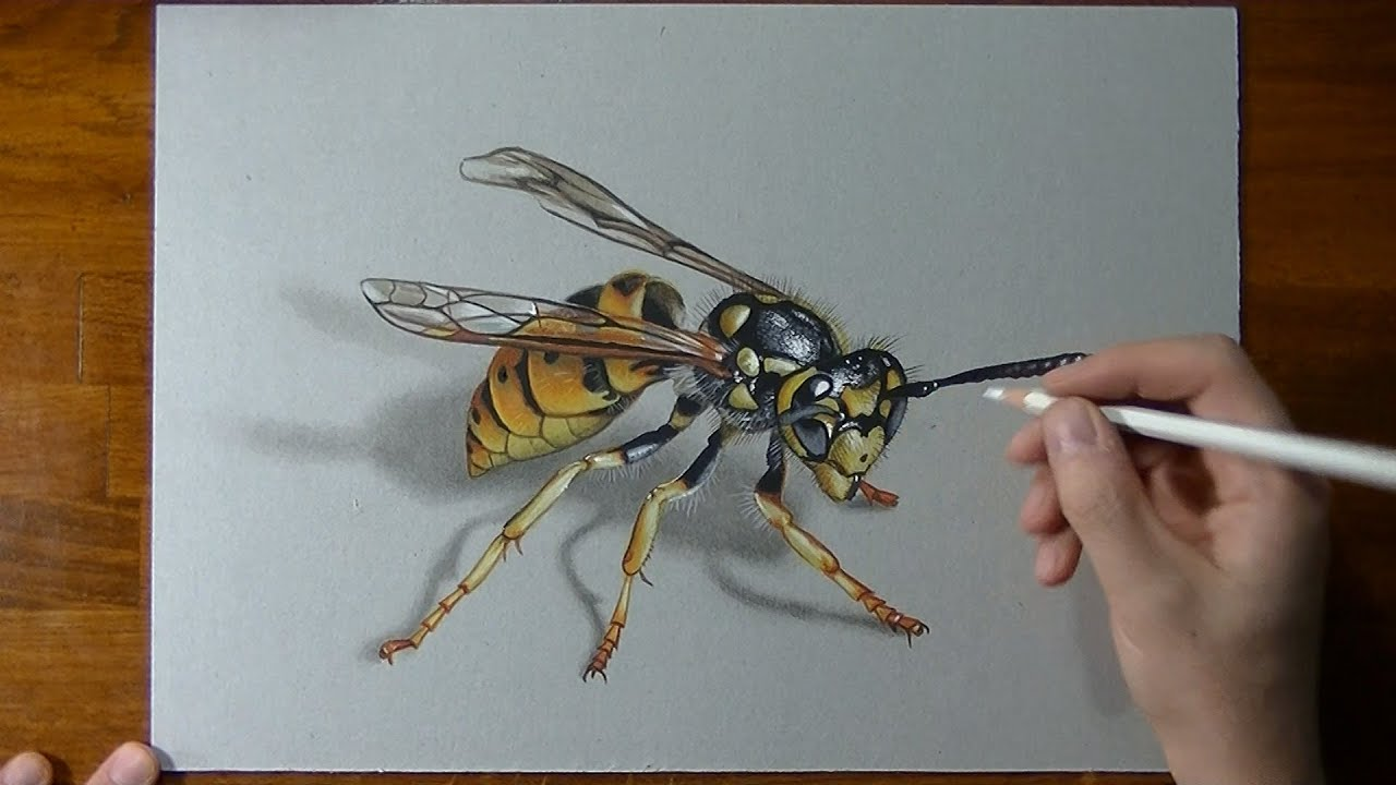 How To Draw A 3d Wasp Youtube