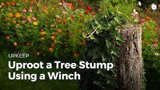 Uproot a tree stump using a winch